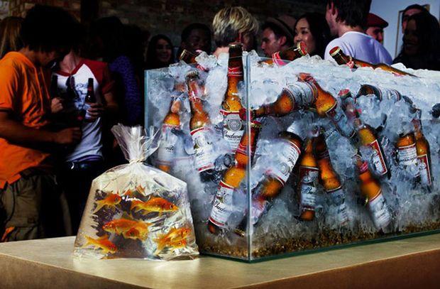 13. Budweiser Gold Fisch