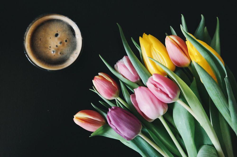 Pixabay, kvety, pivo, tulipány, nápoj, koktaily